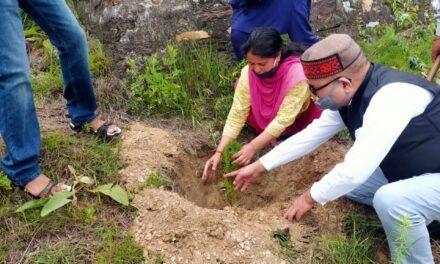 न्यायालय परिसर में जनपद न्यायाधीश ने बॉज, देवदार के वृक्ष लगाकर मनाया विश्व पर्यावरण दिवस